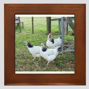 Trio of Chickens Framed Tile