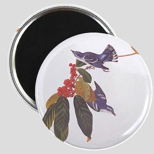 Cerulean Warbler Vintage Audubon Birds Magnets