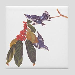 Cerulean Warbler Vintage Audubon Birds Tile Coaste