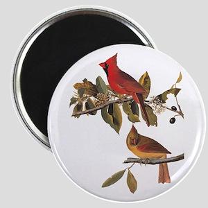 Cardinal Grosbeak Vintage Audubon Birds Magnets