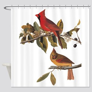 Cardinal Grosbeak Vintage Audubon Birds Shower Cur