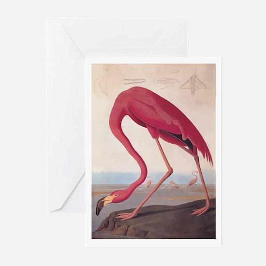American Flamingo Vintage Audubon Bookplate Greeti
