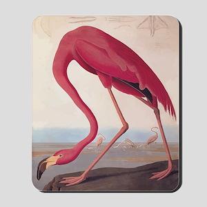 American Flamingo Vintage Audubon Bookplate Mousep