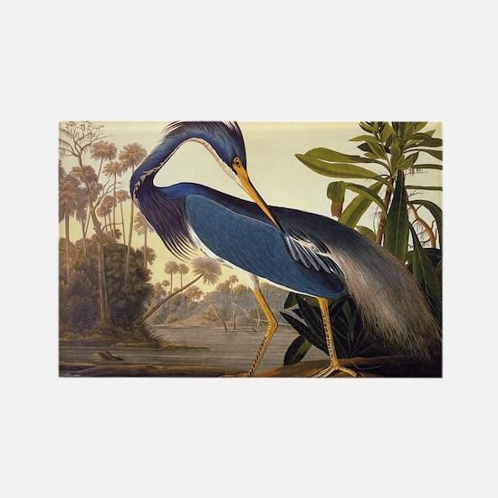 Louisiana Heron Vintage Audubon Bird Magnets
