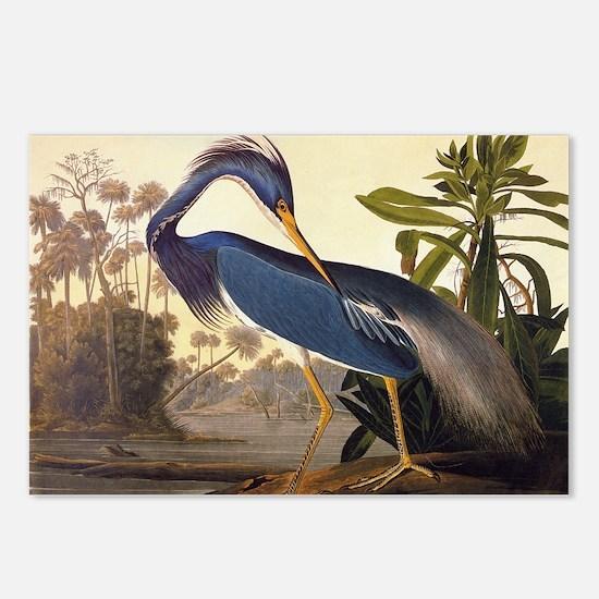 Louisiana Heron Vintage Audubon Elongated Postcard