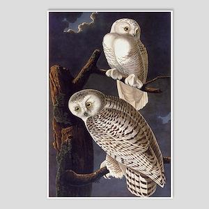 White Snowy Owls Vintage Audubon Wildlife Postcard