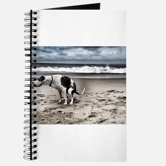 Pooping Pooches Great Dane Journal