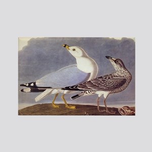 Common Sea Gull Vintage Audubon Birds Magnets
