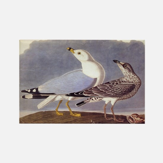 Common Sea Gull Vintage Audubon Birds Magnets