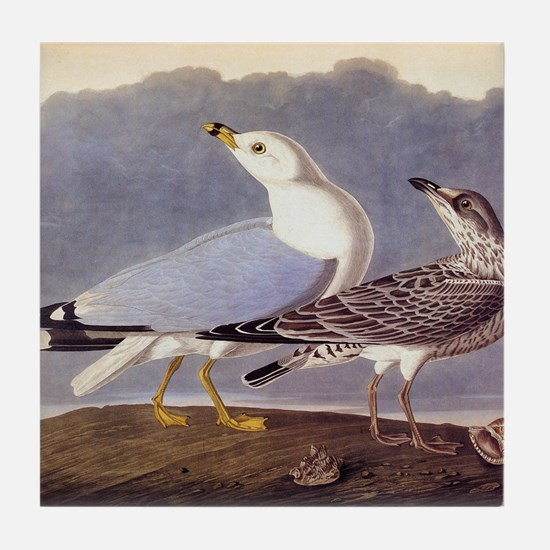 Common Sea Gull Vintage Audubon Birds Tile Coaster