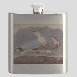 Common Sea Gull Vintage Audubon Birds Flask