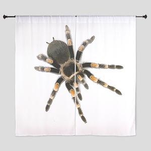 Tarantula Spider Curtains