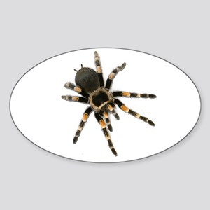 Tarantula Spider Sticker