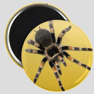Tarantula Spider Yellow Magnets