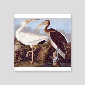 White Ibis Vintage Audubon Bird Sticker