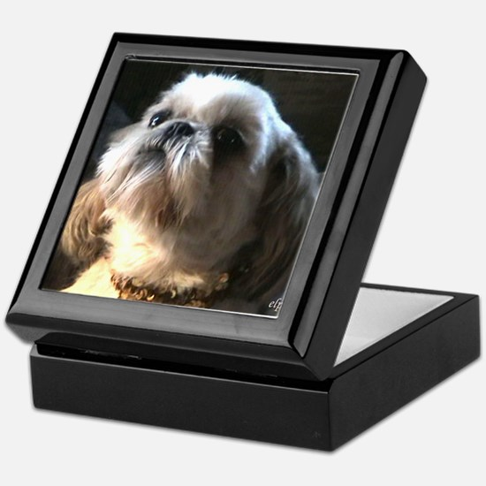 Shih Tzu Puppy Admiration Keepsake Box