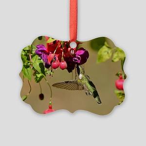 Hummer on fuchsia Ornament