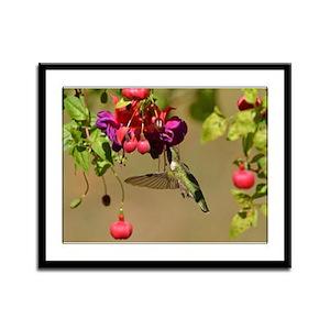 Hummer On Fuchsia Framed Panel Print