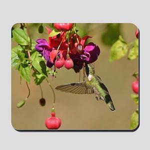 Hummer On Fuchsia Mousepad
