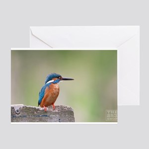 Kingfisher Bird (photocard) Greeting Cards
