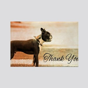 Thank You Boston Terrier Magnets