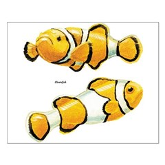 Clownfish Tropical Fish Posters