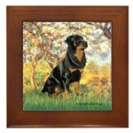 Spring / Rottweiler Framed Tile