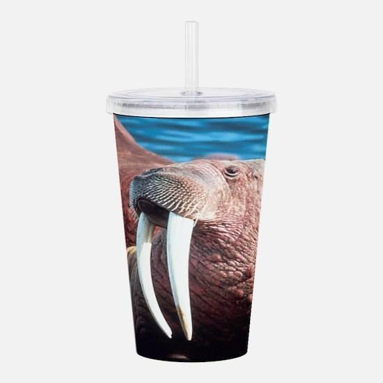 Walrus Acrylic Double-wall Tumbler