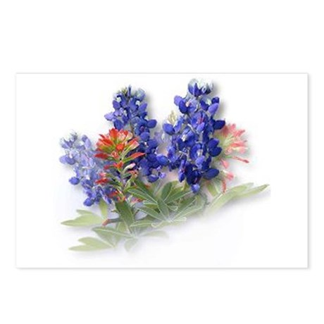 Bluebonnets with Indian Paint Postcards (Package o