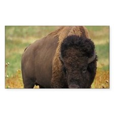 American Bison Sticker (Rectangle)