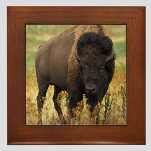 American Bison Framed Tile