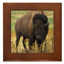 American Bison Framed Tile