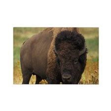 American Bison Rectangle Magnet