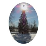 Christmas Star Oval Ornament