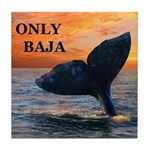 ONLY BAJA DREAM WHALE Tile Coaster