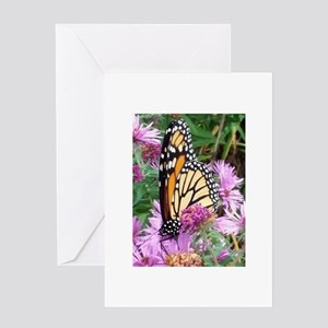 Monarch in Bee Balm Greeting Cards