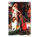 Accolade / Collie (s&w) Postcards (Package of 8)