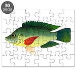 Mozambique tilapia Puzzle