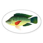 Mozambique tilapia Sticker