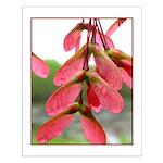 Maple Seedpod Small Poster