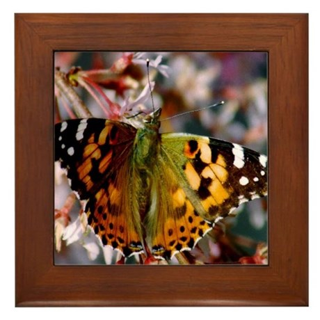 Painted Lady Butterfly Framed Tile