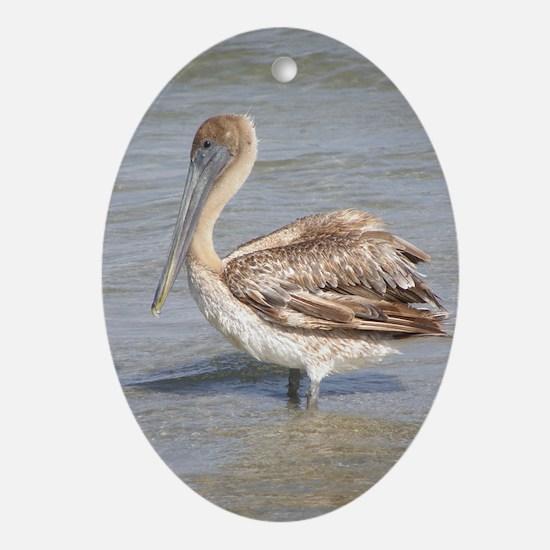 Pelican<br> Oval Ornament