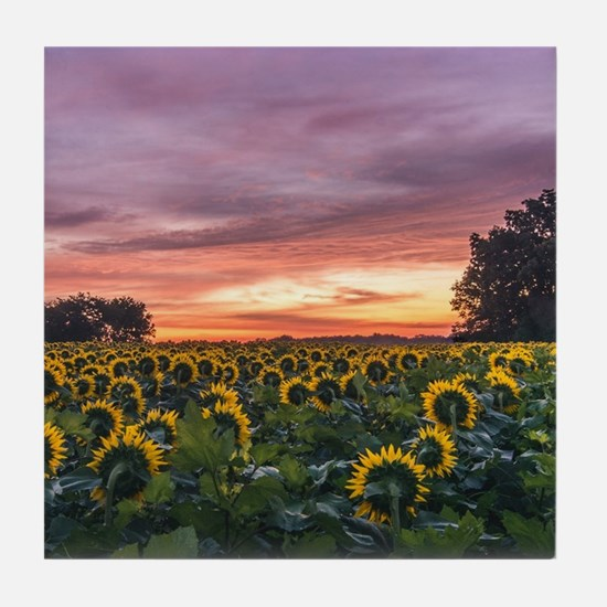 Kansas Sunflower Sunrise Tile Coaster