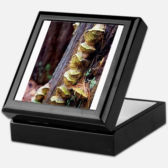 Fungal Keepsake Box