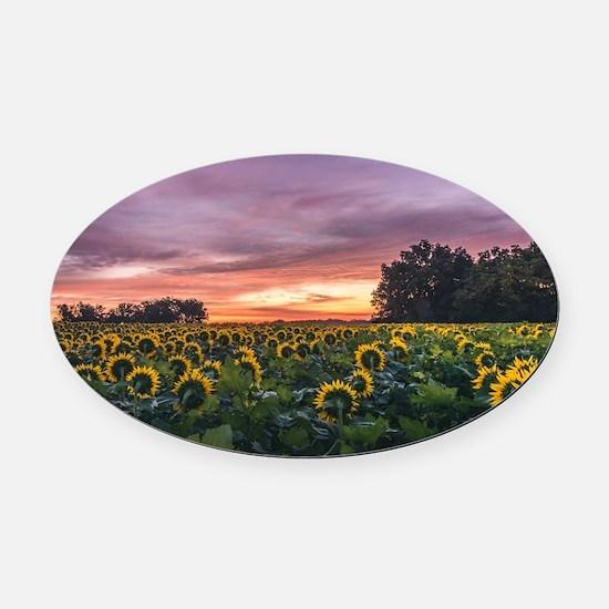 Kansas Sunflower Sunrise Oval Car Magnet
