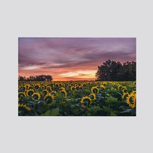 Kansas Sunflower Sunrise Magnets