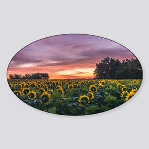 Kansas Sunflower Sunrise Sticker