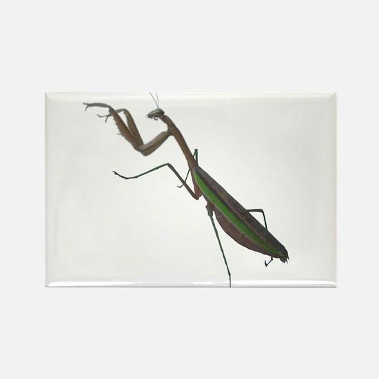 preying mantis Rectangle Magnet