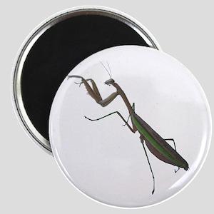 preying mantis Magnet