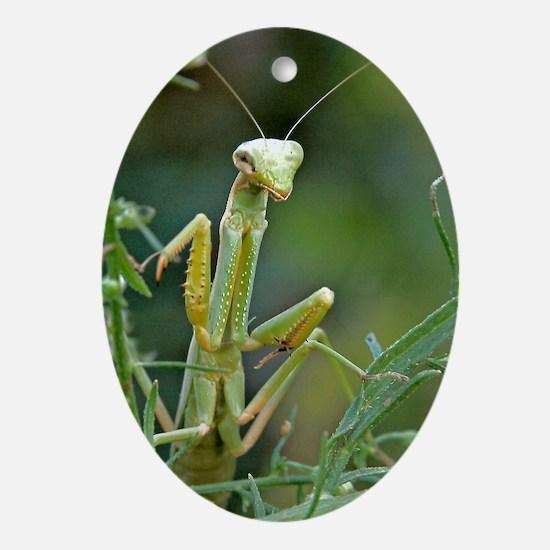 Mantis 475 Oval Ornament